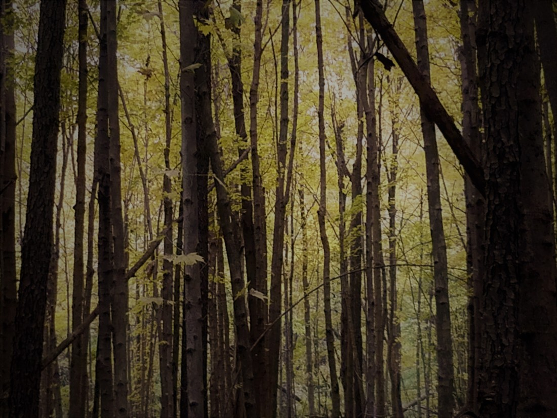 mac trees 2