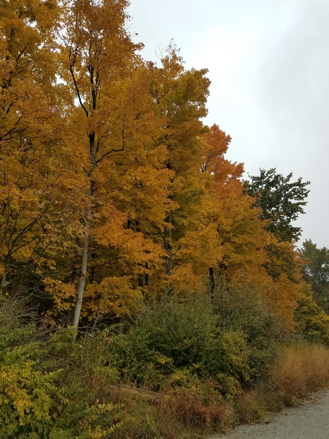 Mac Trees